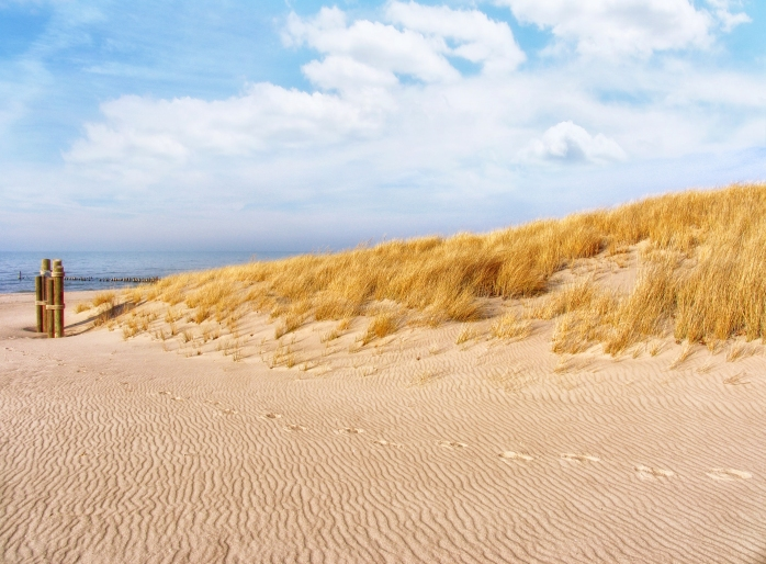 Golden Beach grass dune