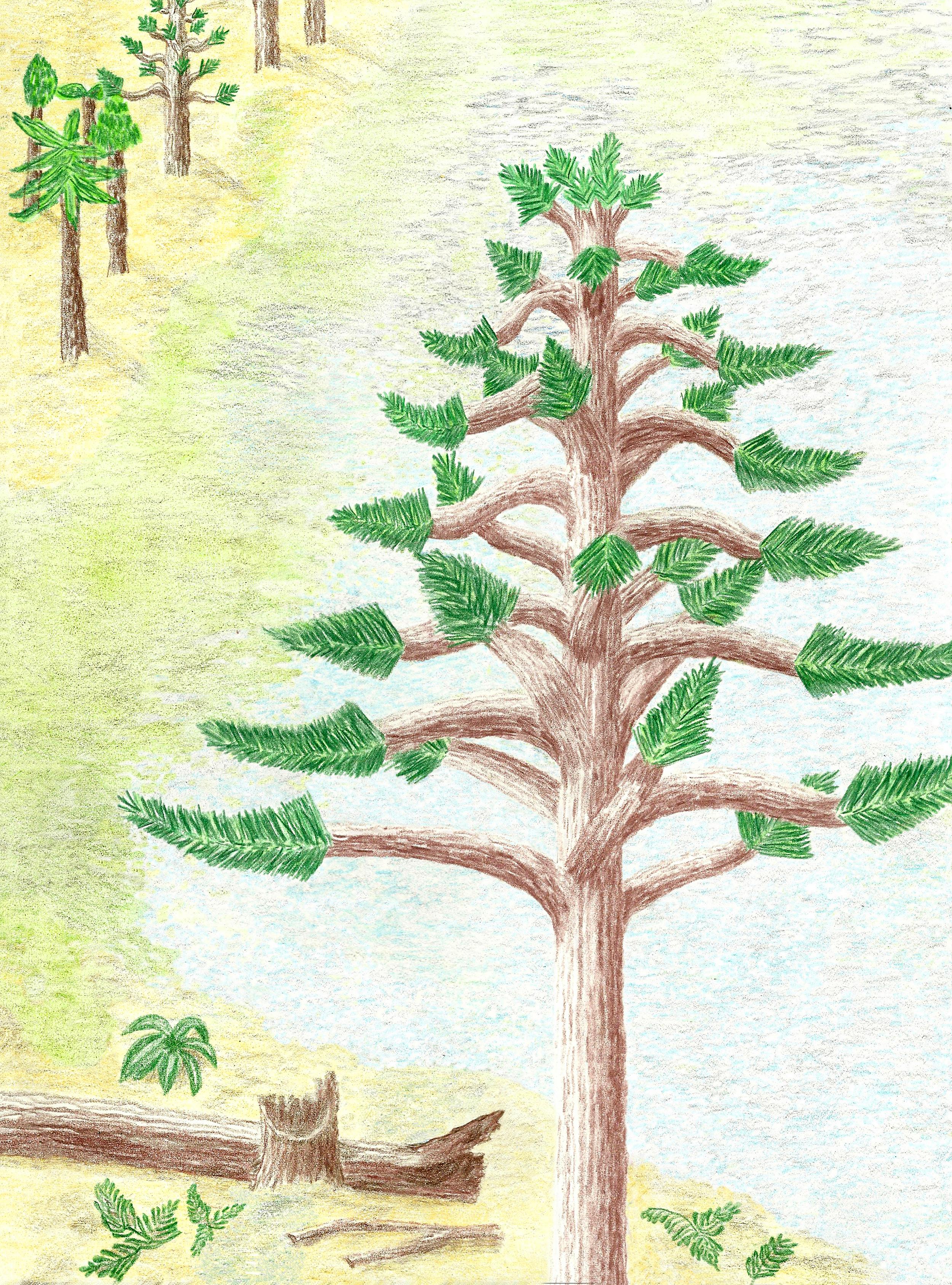 petrified wood drawing | Fossil Lady